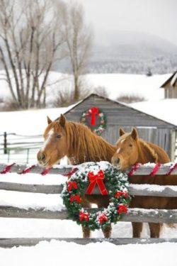 Xmas Horse Gifts