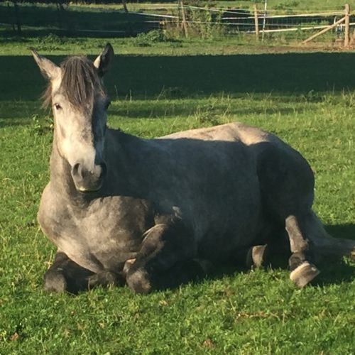 "GREENSPOT REMOVER ""Good at removing grass stains from our grey ponies' legs, and less stressful than a full on bath!"""